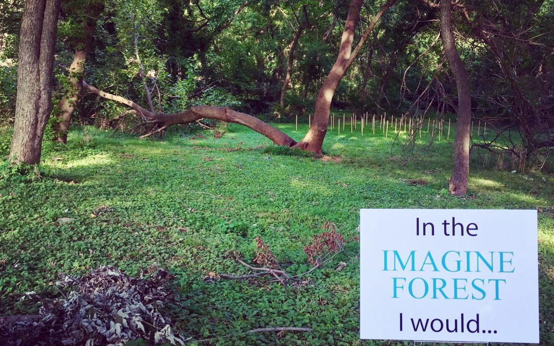 The Imagine Forest – A KaBoom Finalist!