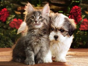 Is A New Puppy or Kitten on Your List to Santa?